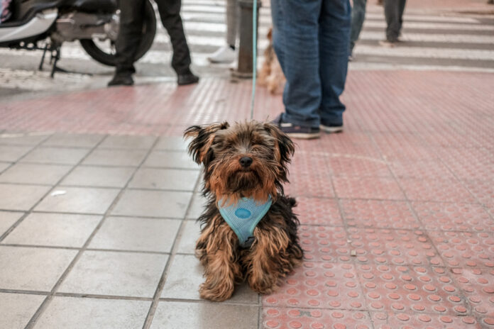 Mijas Dog Walkers Will Have To Wash Away Urine