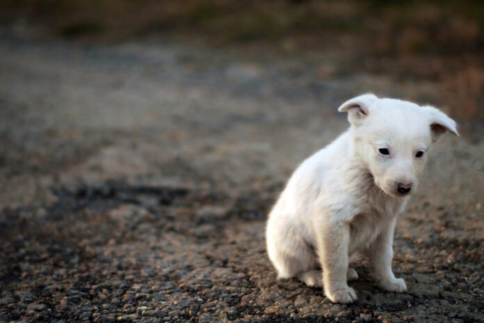 Worrying Numbers of Puppies Abandoned In Malaga